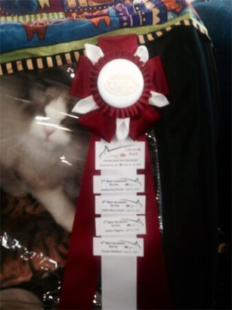 Maximus received FOUR Finals in one day at the Framingham Show!