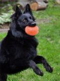 LABun-Dog